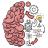 icon Brain Test 2.696