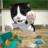 icon Cat Sim 3.3.97