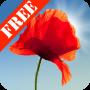 icon Poppy Field Free
