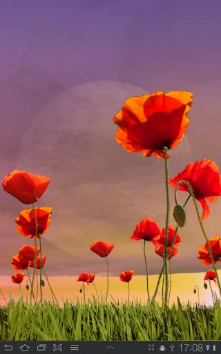 Poppy Field Free