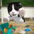 icon Cat Sim 4.7.3