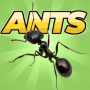 icon Pocket Ants